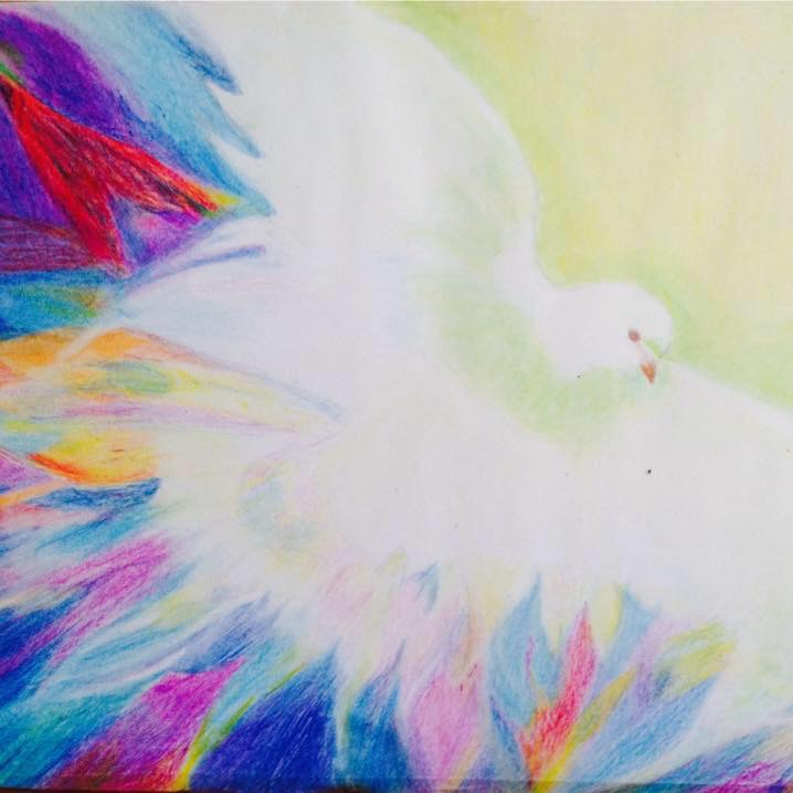 Witte duif met regenboog kleuren