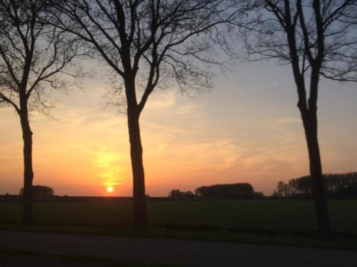 De ondergaande zon achter de bomen in Zeeland