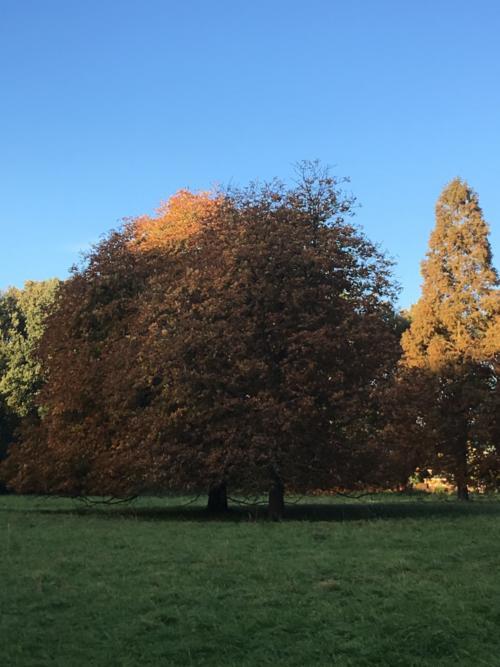 Een hart in de kruin van de boom