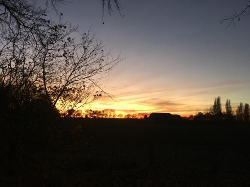 Mooie avondlucht achter de bomen