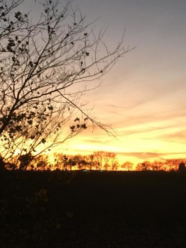 Ondergaande zon achter de bomen