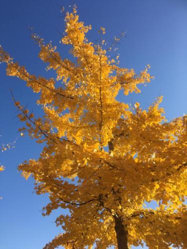 Mooie gele herfstboom