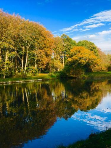 Herfstbomen langs het water