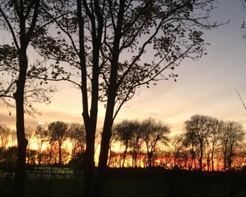 Bomen en mooie avondlucht